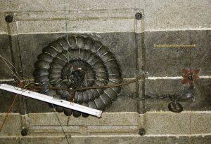 Thiruvadikai, Shri Tripurasamhara: mandapa ceilings