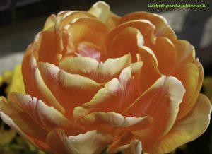 Flower of Life, embodyment of Brahman