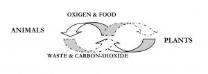 Breath and Cosmos, food, oxigen, carbondioxide life cylce